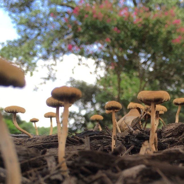 On the Ground with Mushrooms